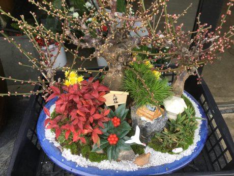 朝一番で納品してきました、今年もよろしくお願いします、新年、おめでたい寄せ植え、3種類の梅、