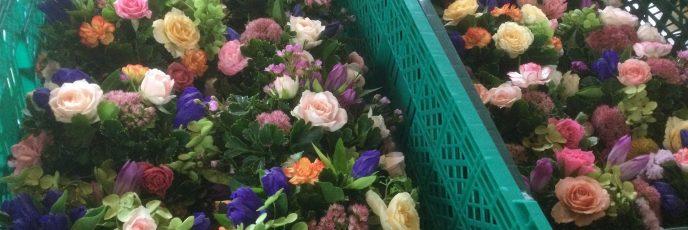 ペットのための供養花は直径20cm位の可愛らしいリースです。この画像からは、わかりませんね!画像はお届けしました一部になります。